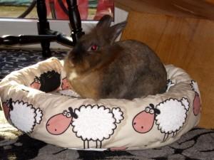 auch für Kaninchen